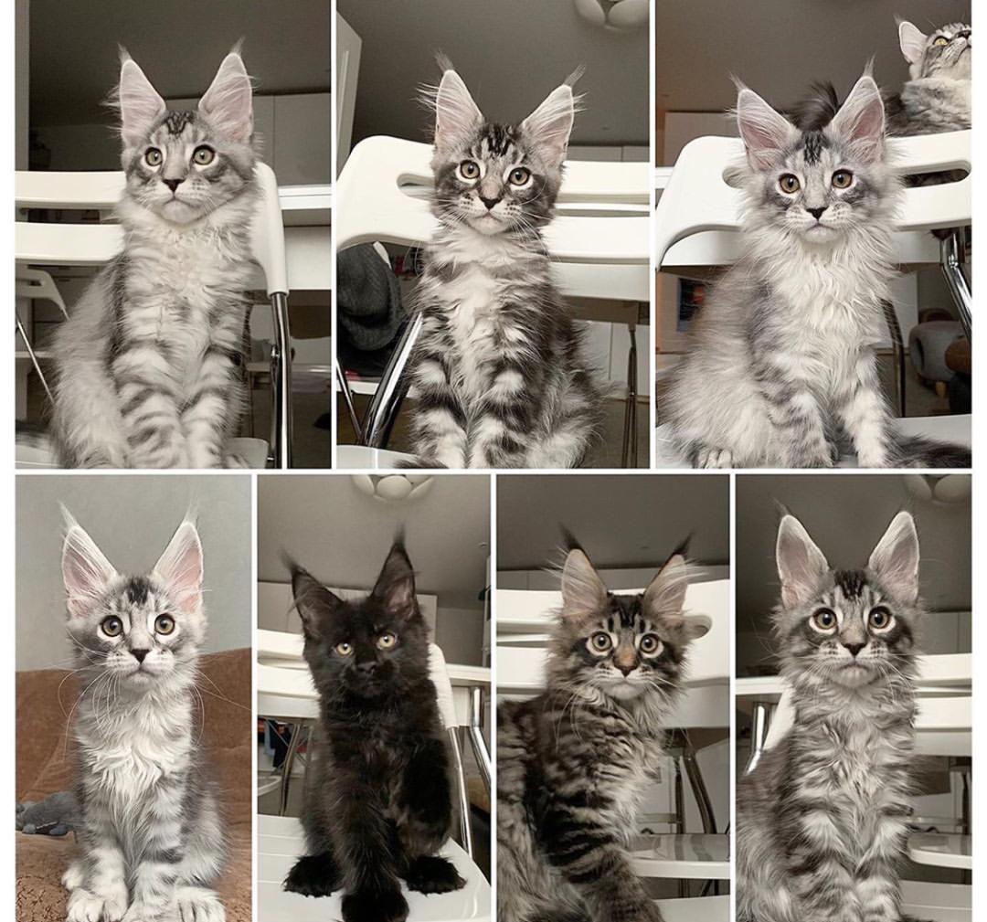 Cats For Sale In Bristol Connecticut