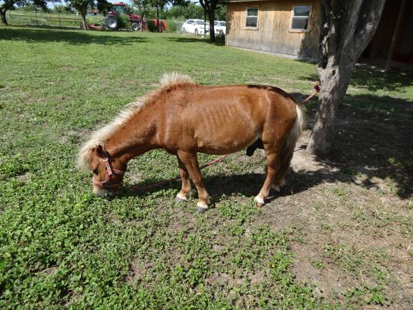 Horses For Sale in East Vassalboro Maine, Craigslist Classifieds